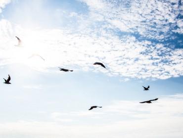 Schulisches Engagement beim Klimaschutz: Neues Konzept für fifty/fifty