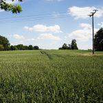Übernahme der Energienetze – Volksentscheid wird konsequent umgesetzt
