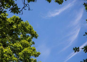 Klimaplan, Klimagesetz und Verfassungsänderung: Hamburg ist bundesweit Vorbild beim Klimaschutz